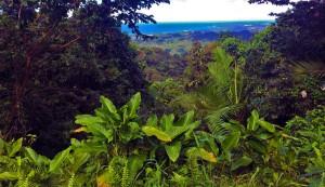 El-Yunque-PR-recording-continuing-medical-education